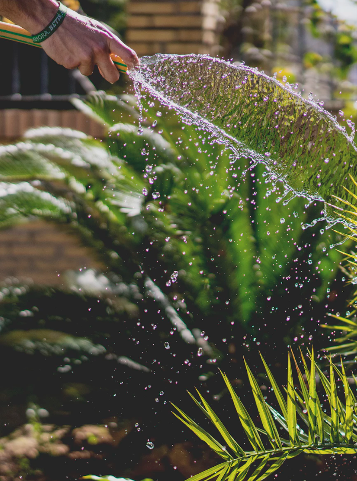 économiser l eau du jardin grâce au paillage et a l espace des tontes - blog déco - clematc