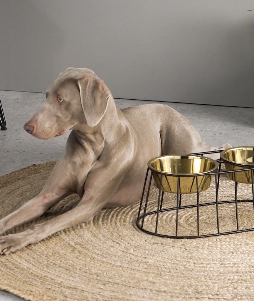 porte gamelle gold made design pour grand chien coin repas - blog déco - clemaroundthecorner