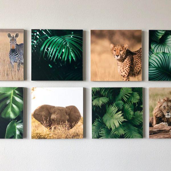 décoration retour voyage pele-mele photos safari jungle mixpix