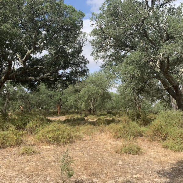 forêt chênes liège Portugal leroy merlin - blog déco - clemaroundthecorner