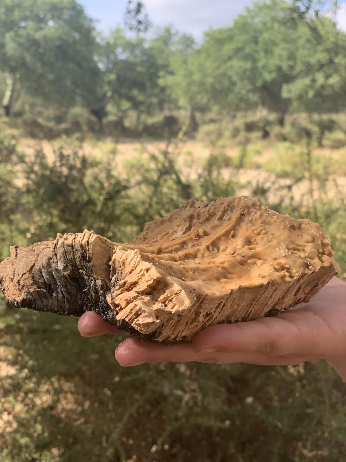 écorce liège forêt main manteau arbre matériau renouvelable responsable - blog clematc