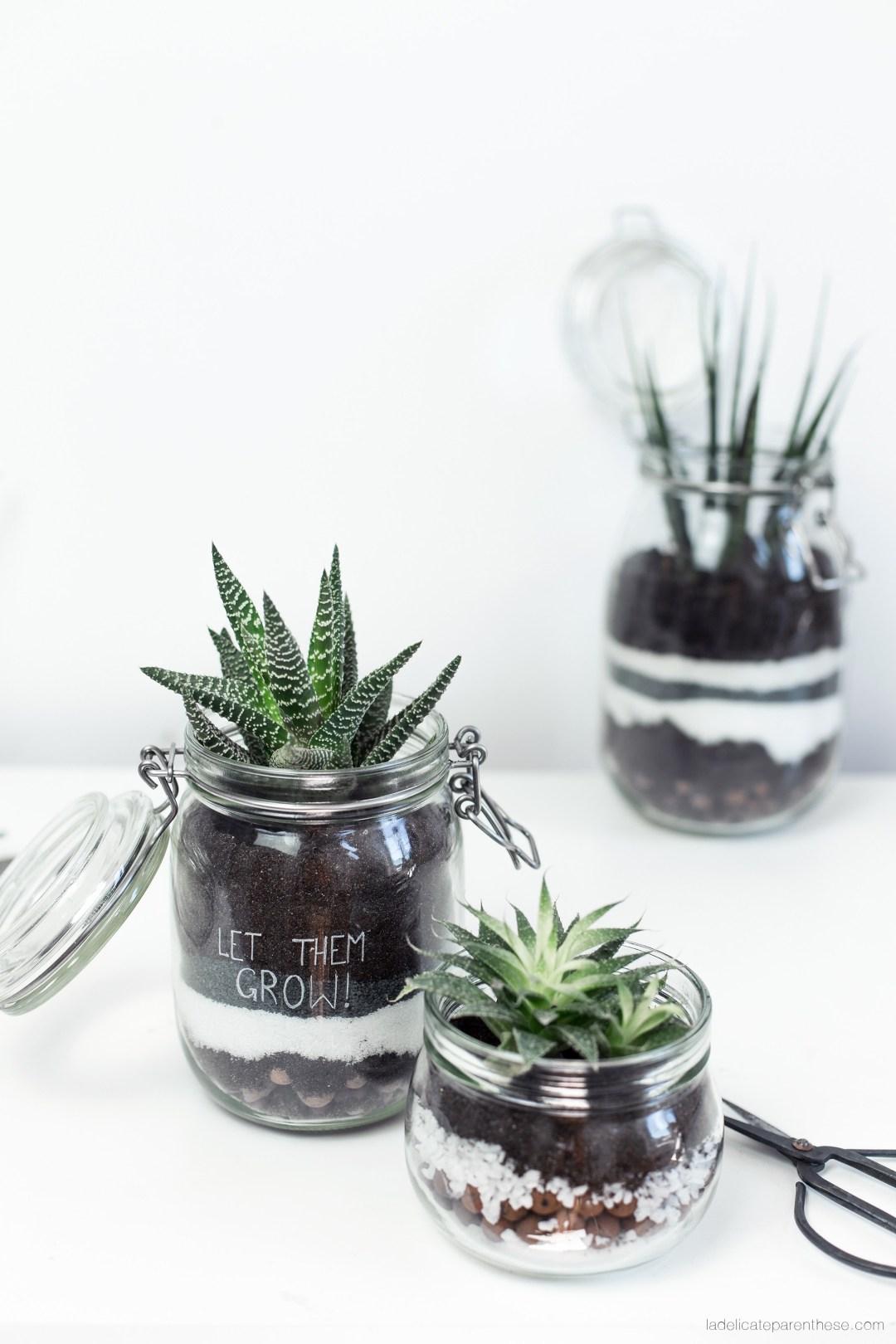 DIY terrarium décoration intérieure plante grasse
