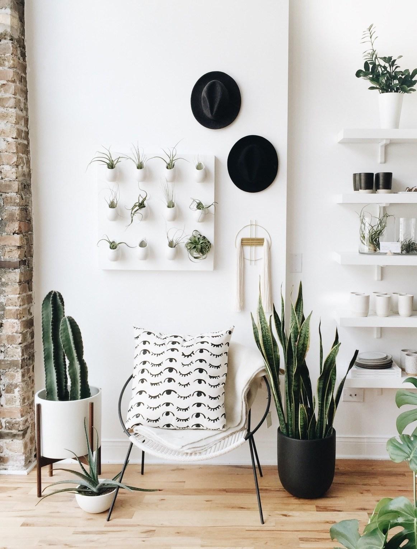 déco salon blanc épuré nature plante grasse