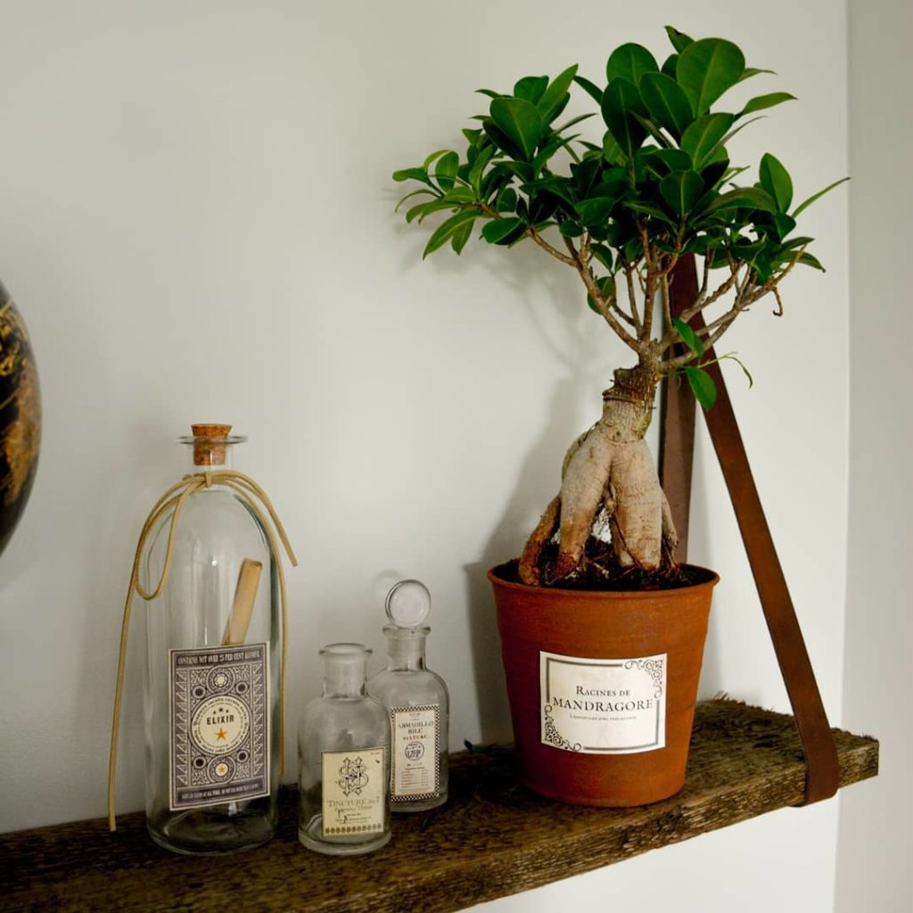 chambre thème harry potter plante racine de mandragore