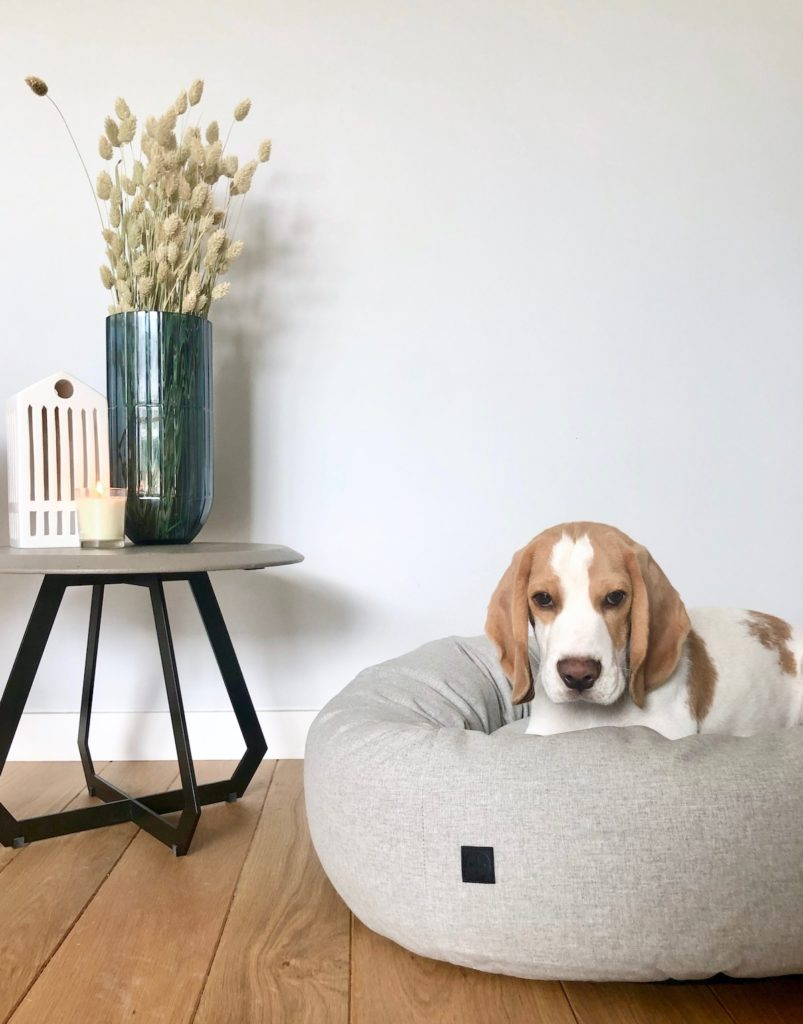 panier design chien beagle confortable déco clem around the corner