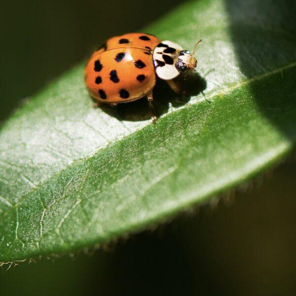 jardin bio ville astuce écolo entretien plante fleur - blog déco - clem around the corner