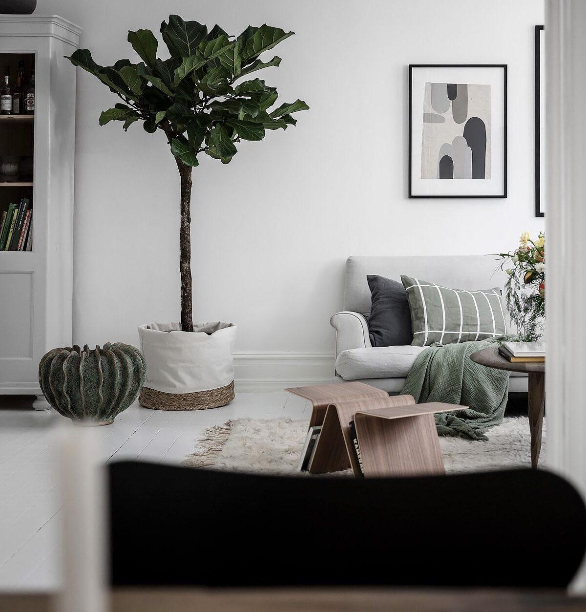salon blanc nature végétal Ficus Lyrata géant arbuste intérieur