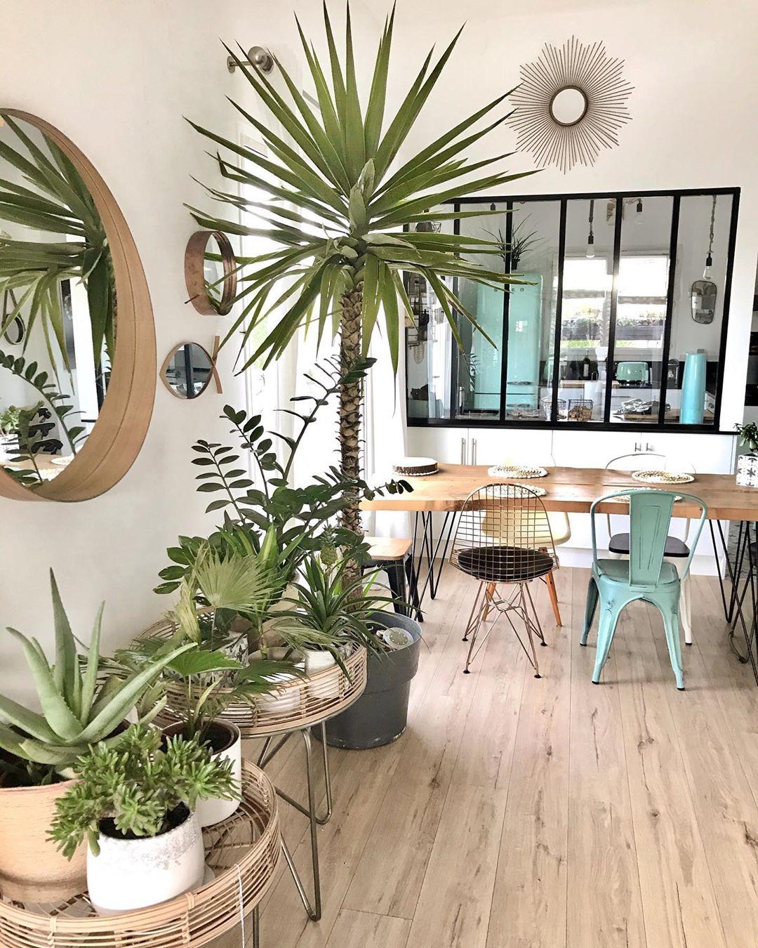 séjour parquet en bois plantes verte déco tropicale chaises dépareillées blog clematc