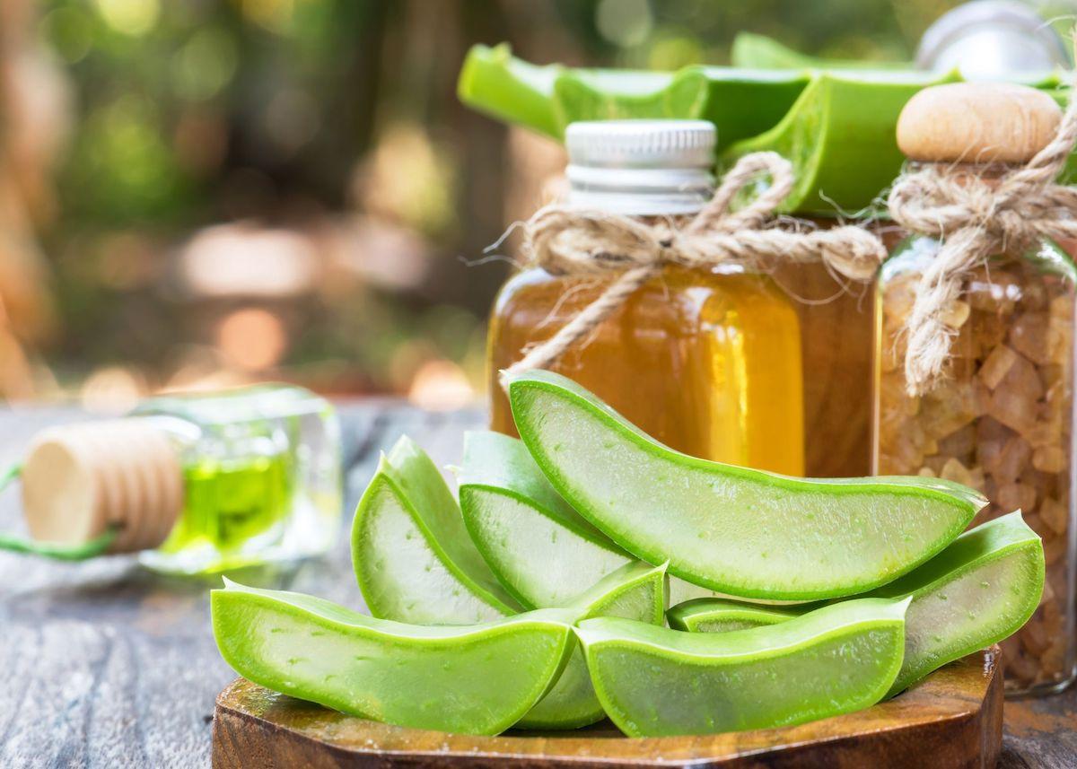 bienfaits aloe vera conseils astuces soin maison naturel corps cheveux organisme
