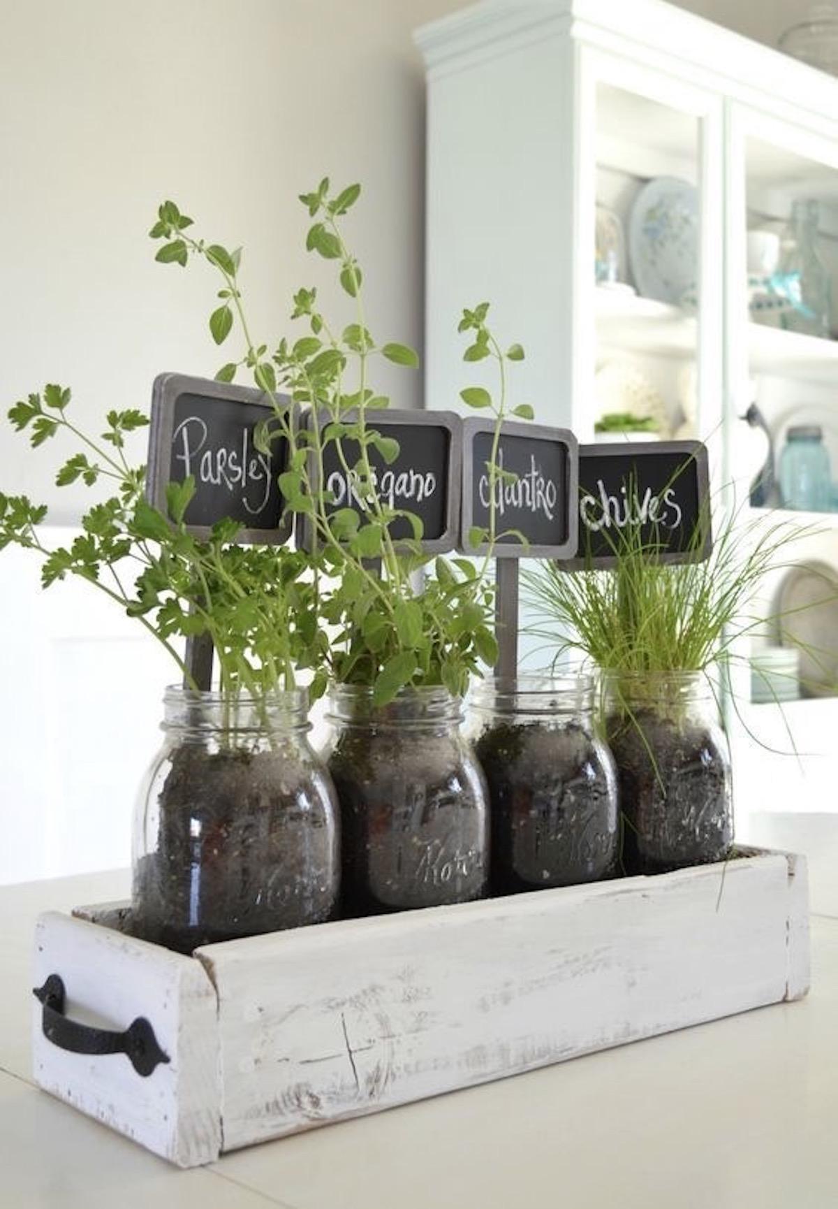 bocal verre plante aromatique cuisine potager intérieur