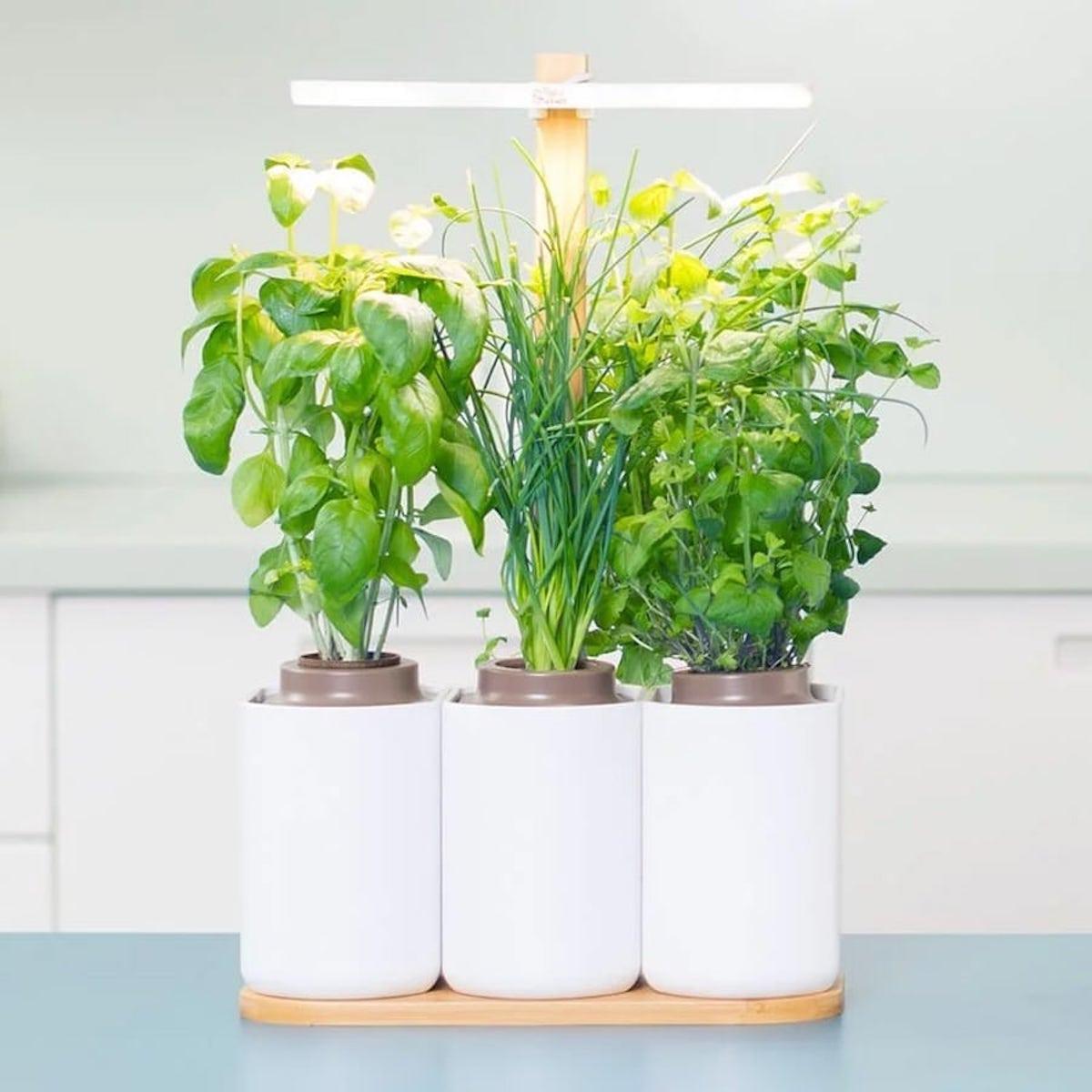 lilo jardin potager cuisine menthe basilic