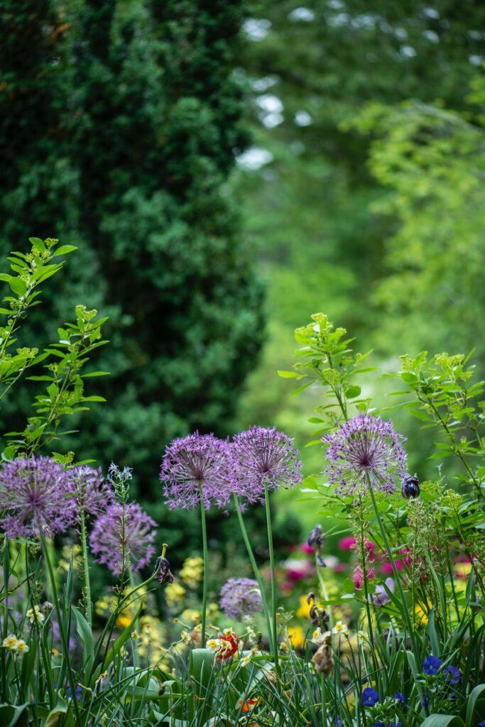 plantation champêtre extérieur style cottage fleur des champs - blog déco - clem around the corner