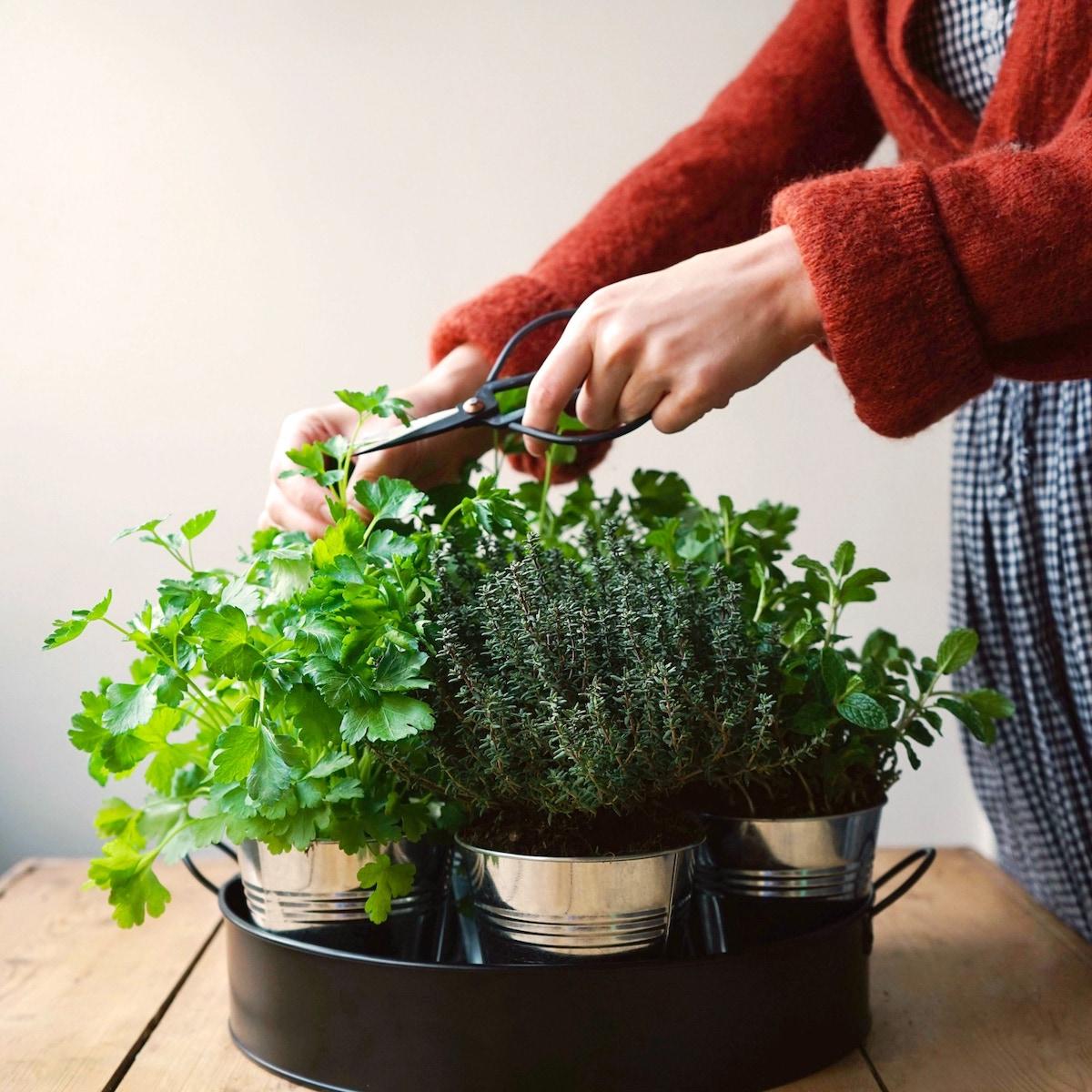 plateau noir de aromates cultiver table bois - blog déco - clemaroundthecorner