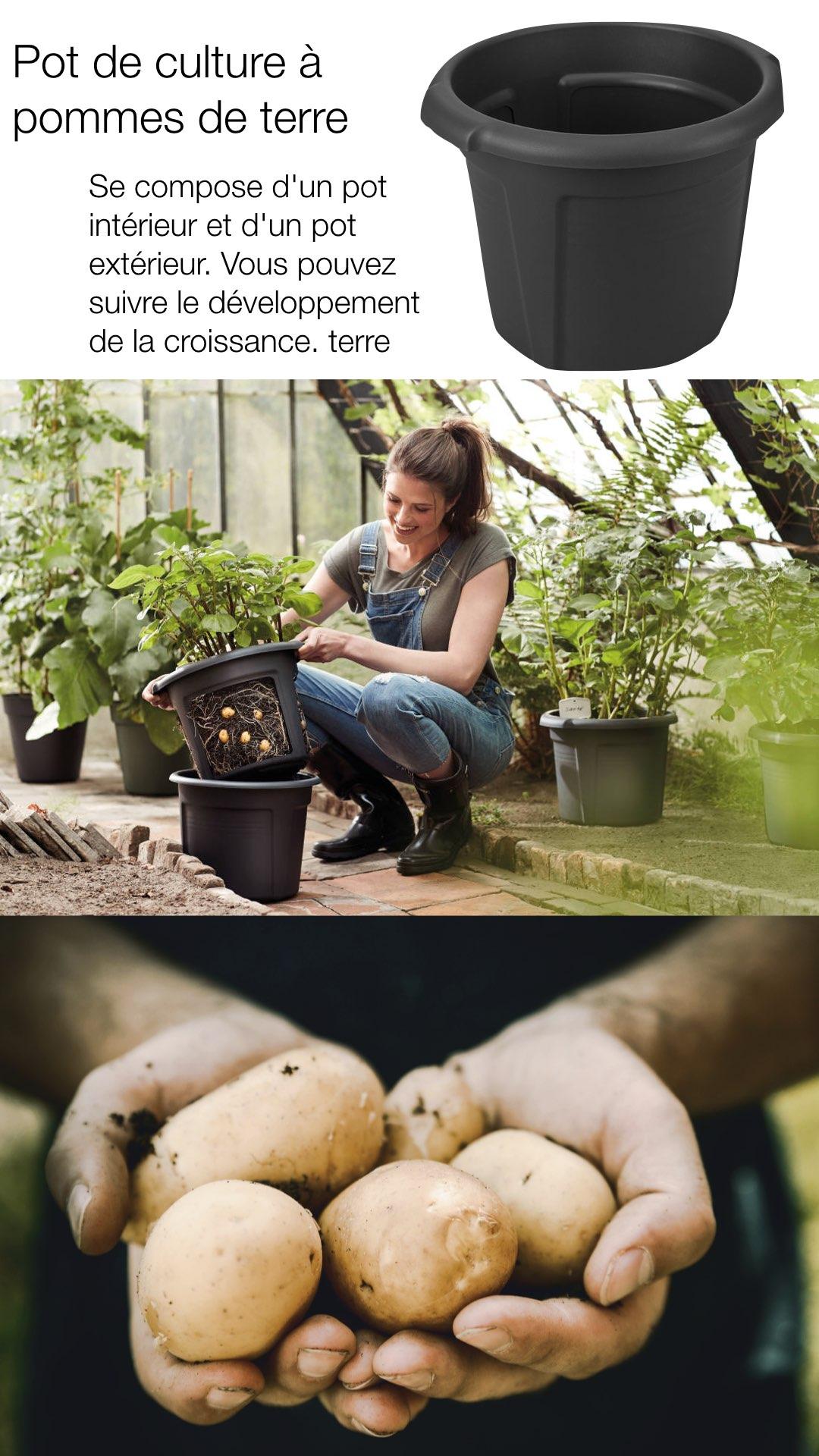 potager en ville culture pomme de terre avis conseil pot elho test