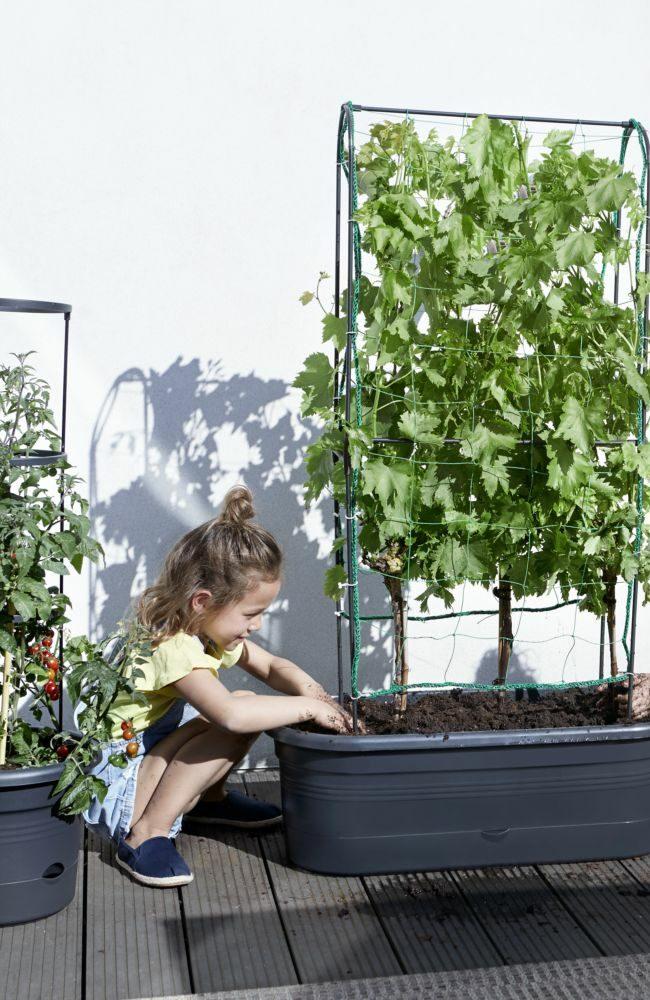 potager ville terrasse balcon plantation tomate cerise conseil astuce pot jardinière