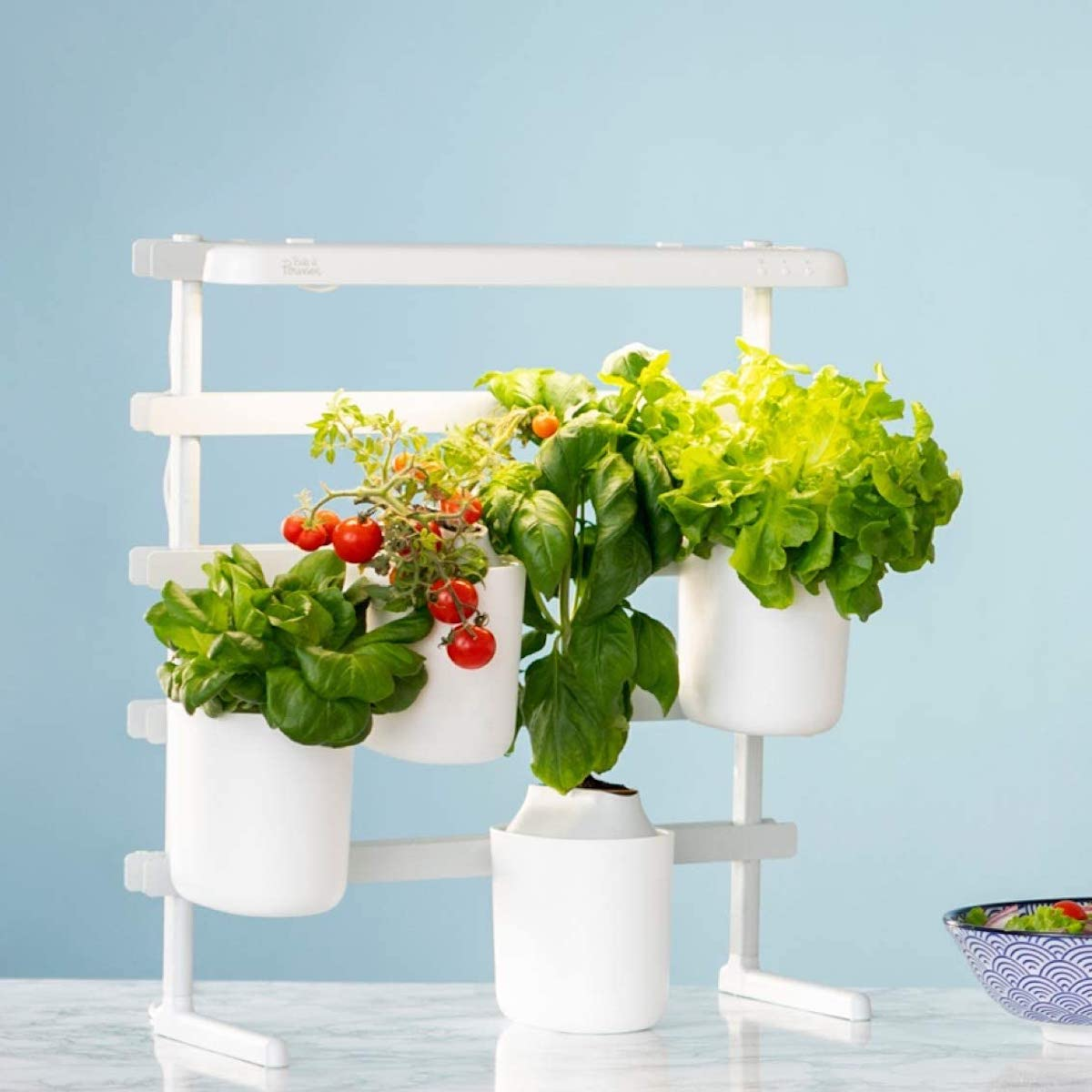 prêt à pousser tomate cerise menthe cuisine potager jardin - blog déco -clematc