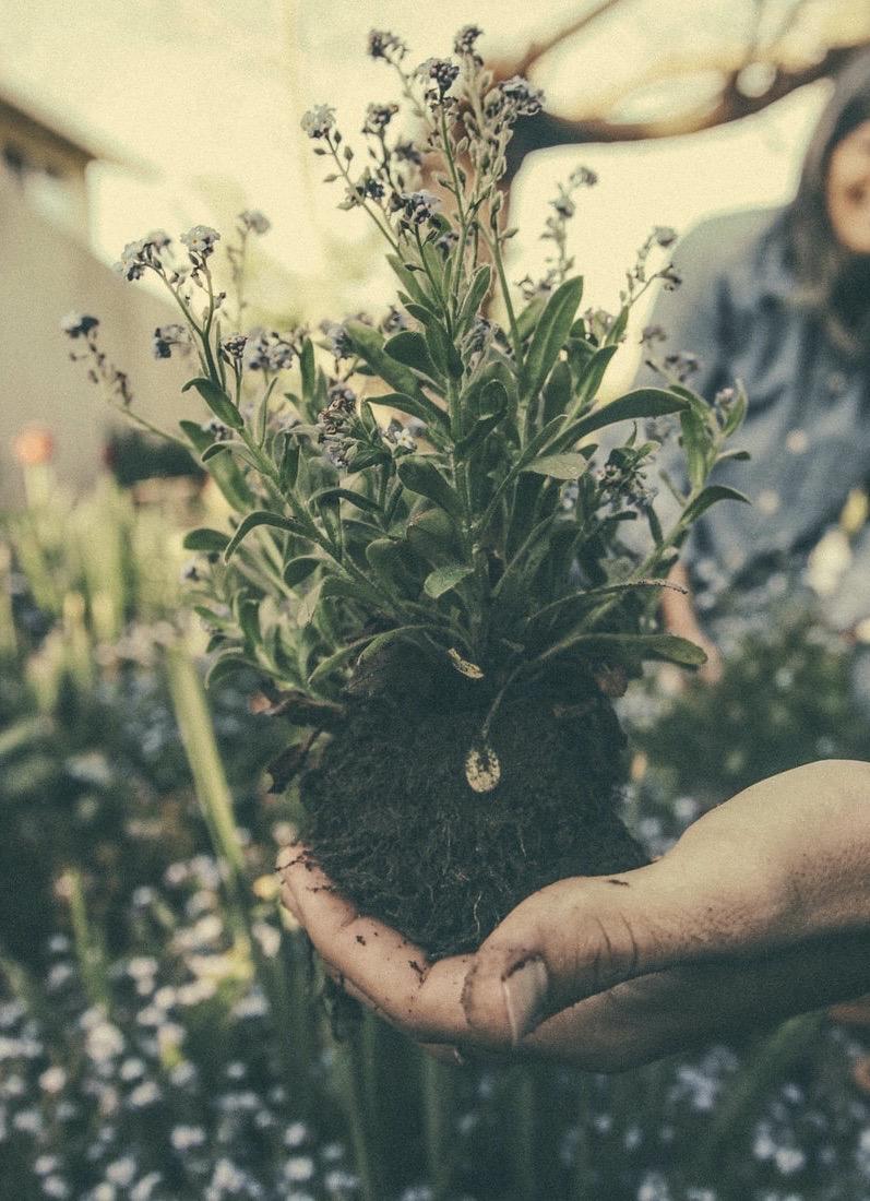rempoter terre jardin plantation jardiner - blog déco - clemaroundthecorner