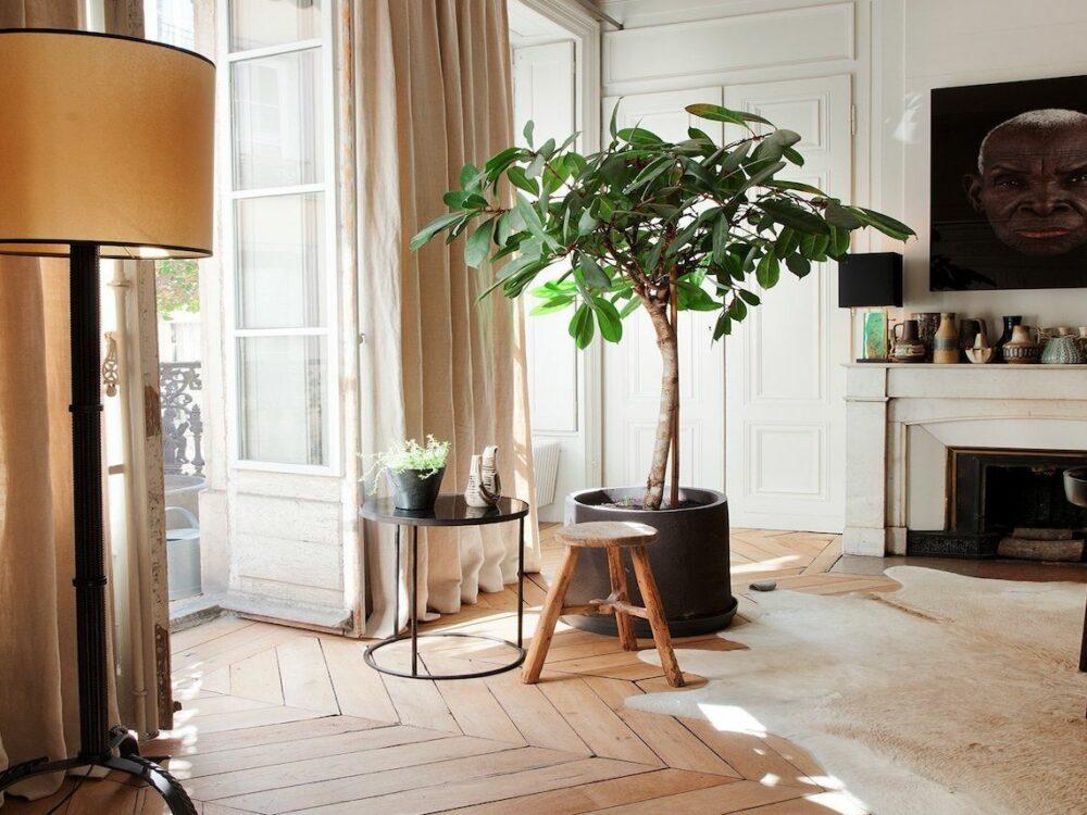salon lumineux parquet bois tapis peau animaux