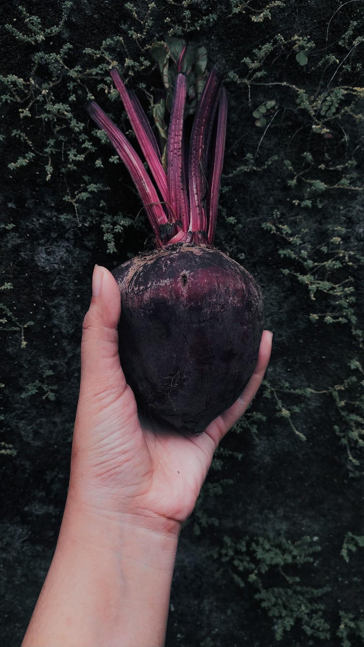 betterave terre planter potager jardin cultiver légume - clematc