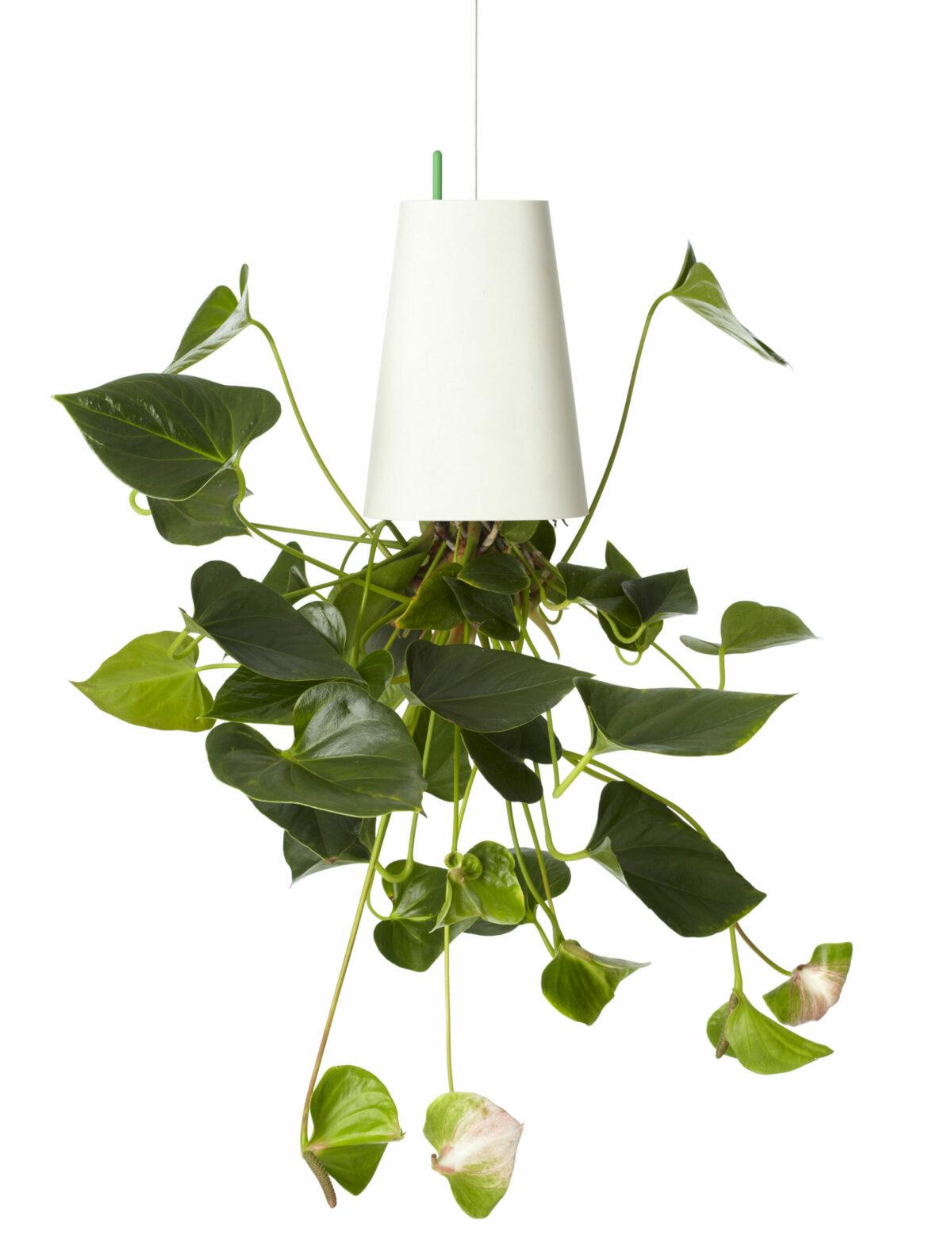 jardinière suspendue tombe plafond illusion déco green plante