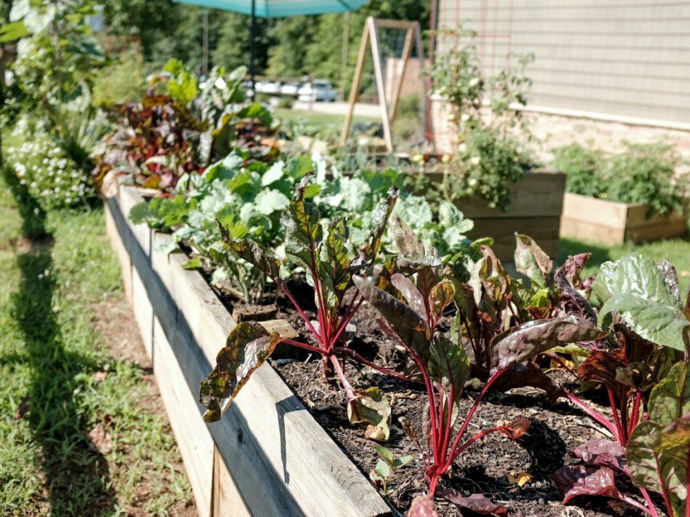 que planter au mois de mars jardinage - clematc