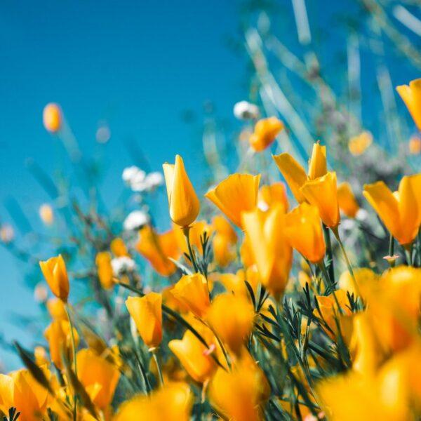 que planter en avril jardin fleuri potager verger - blog déco - clematc