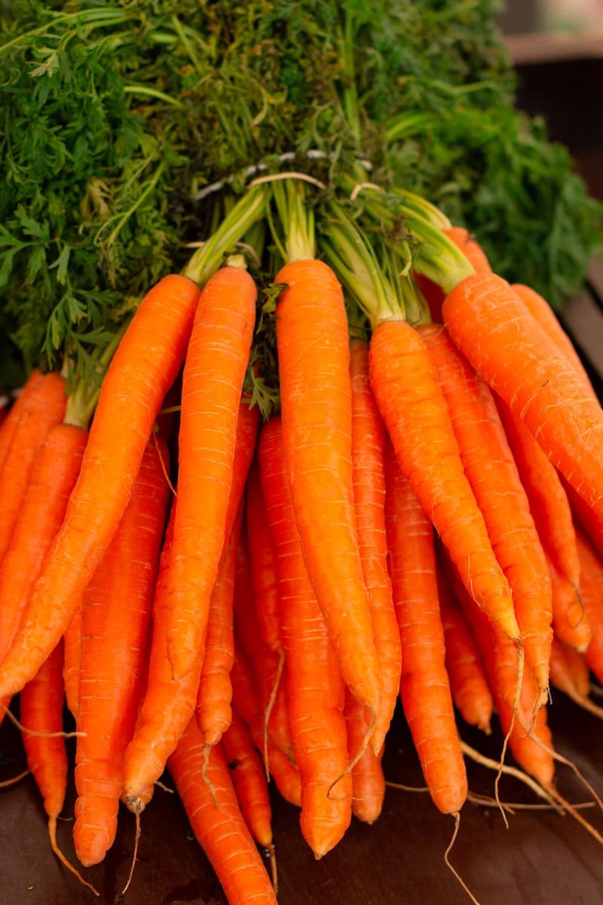 que planter en mars potager carottes jardinage semer plantation