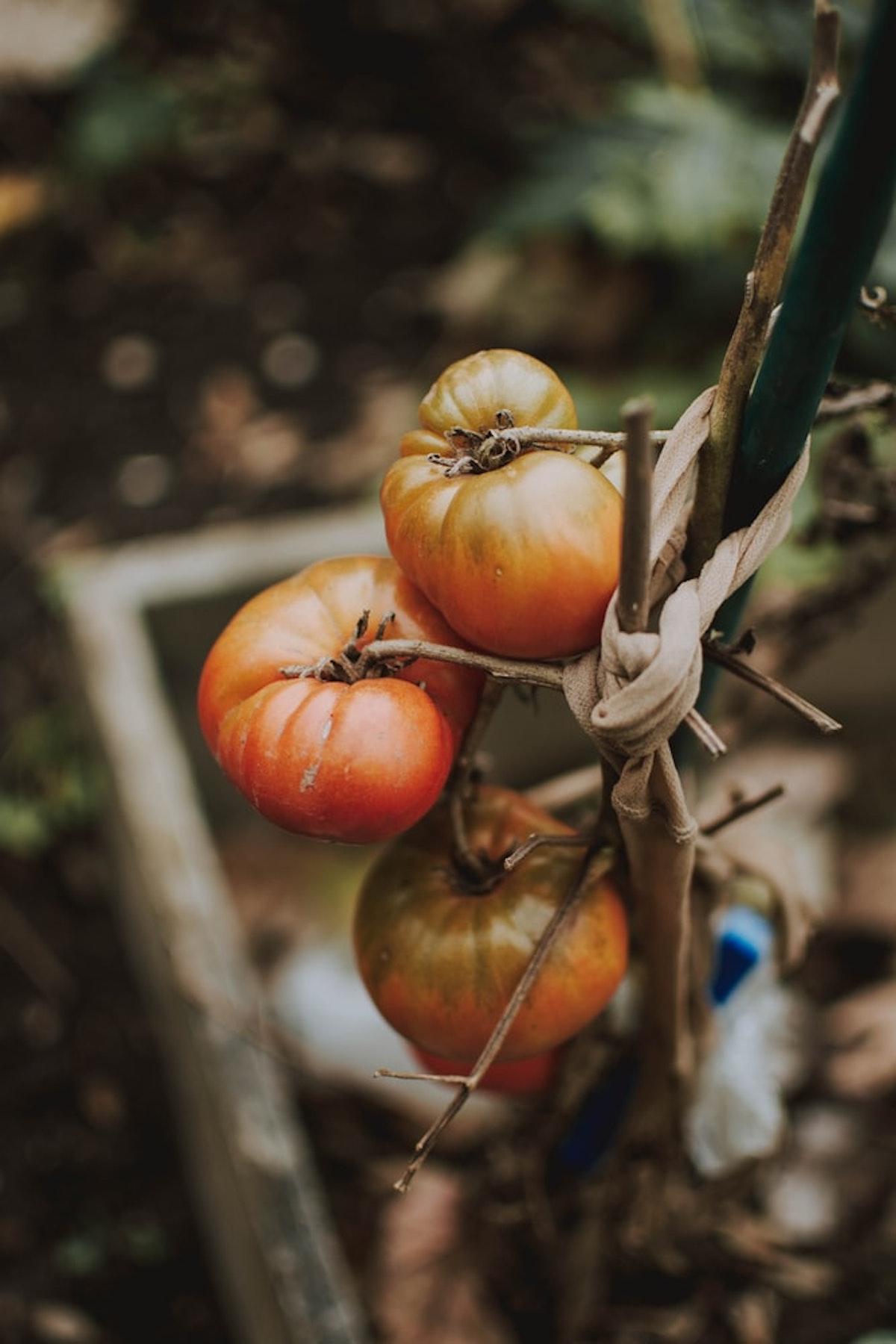 semer graines tomates sous serre abris - blog déco - clematc