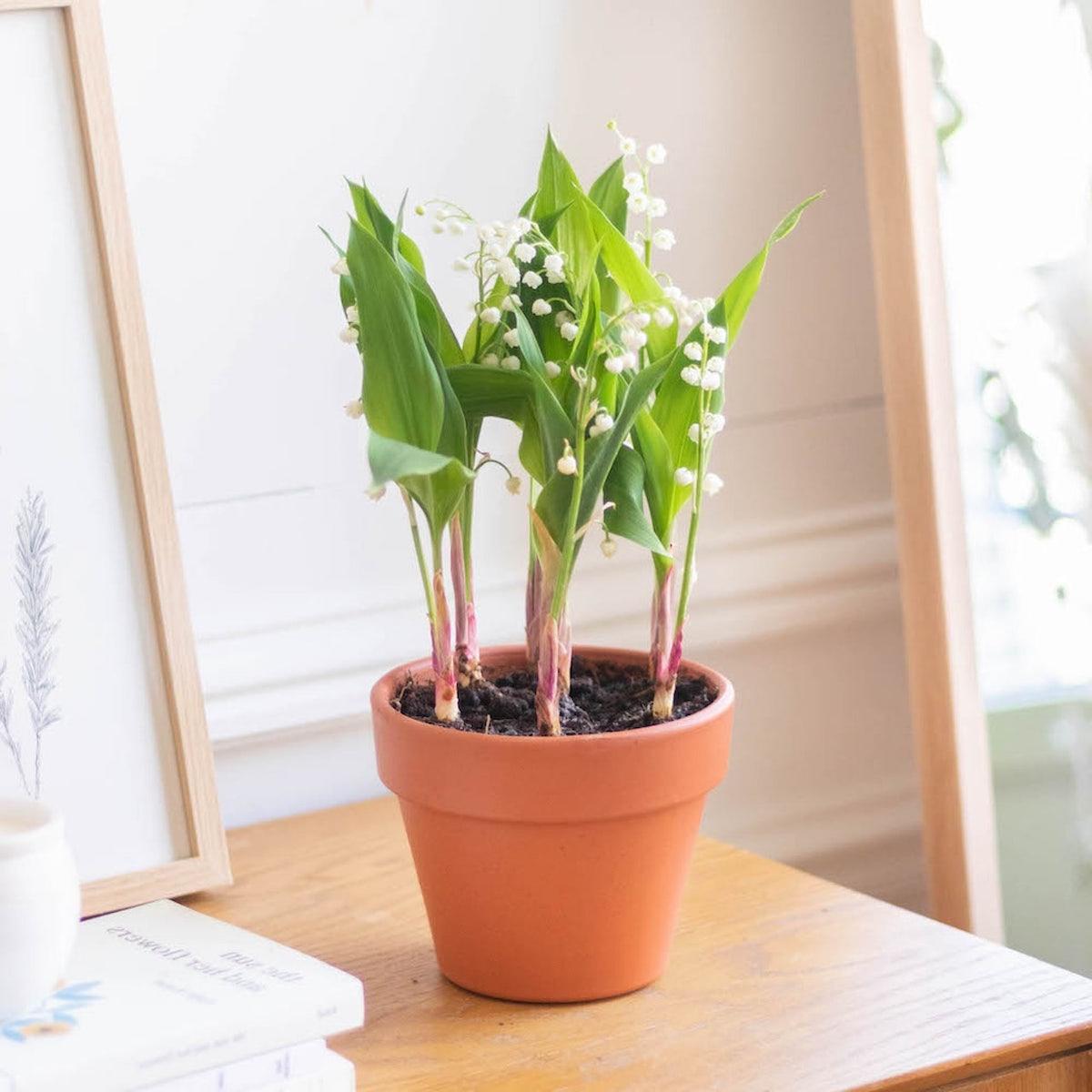 bien choisir plante fleurs bouquet à offrir fête des mères
