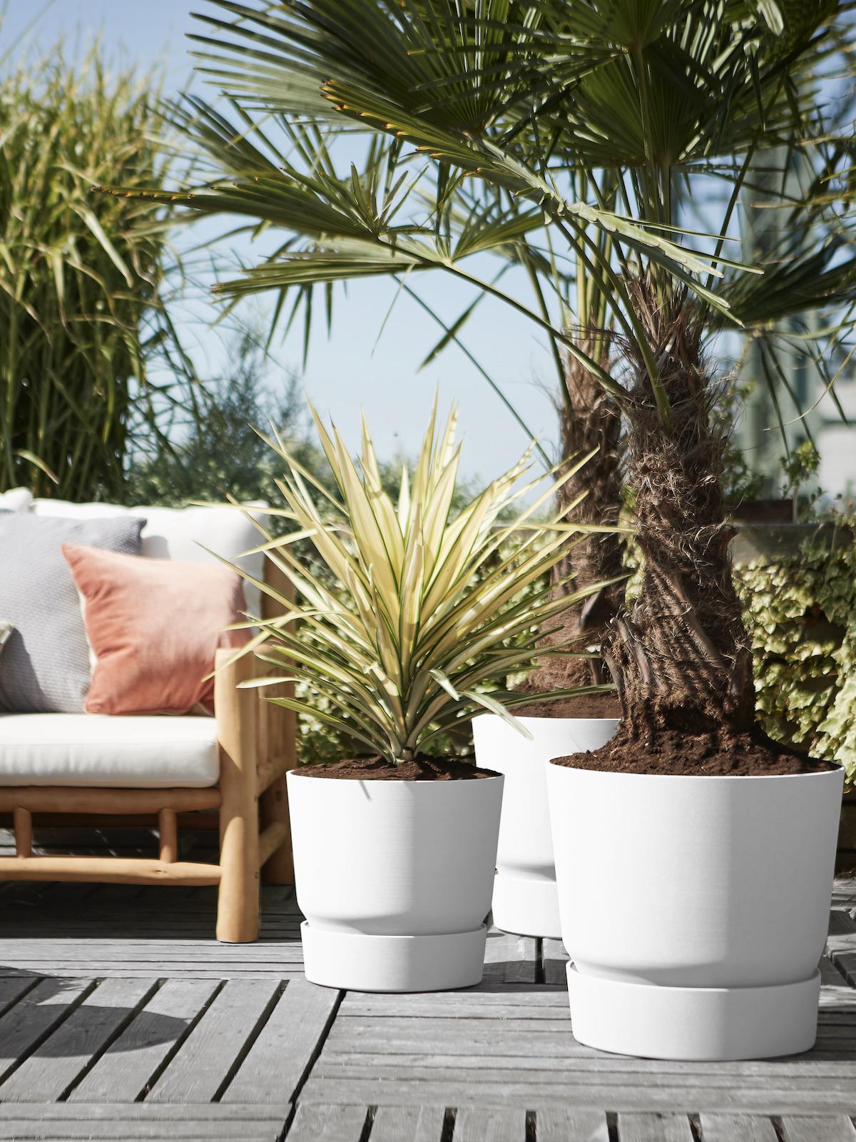 aménagement terrasse palmier bois palette déco