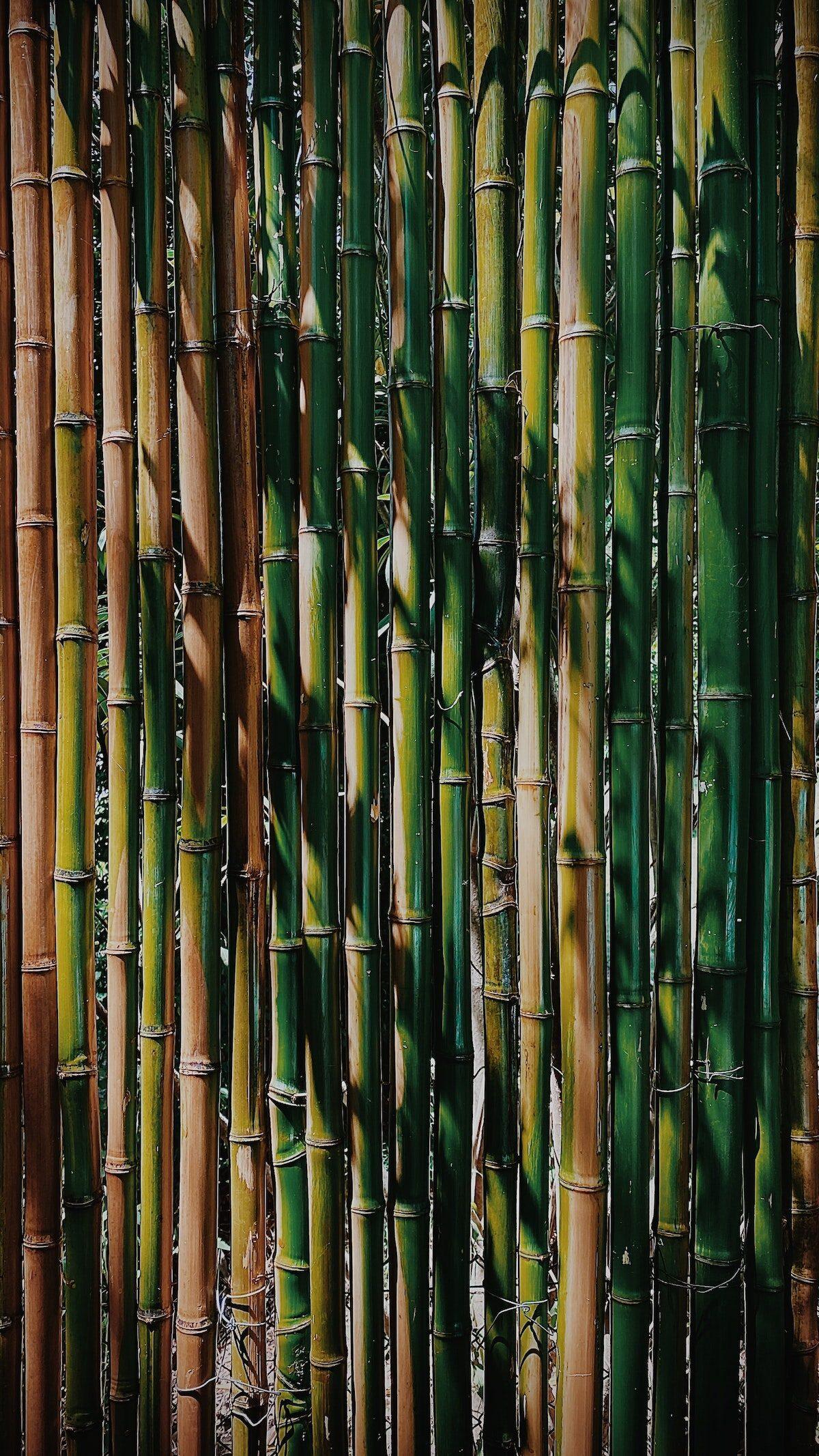 comment faire pousser bambou terrasse jardin