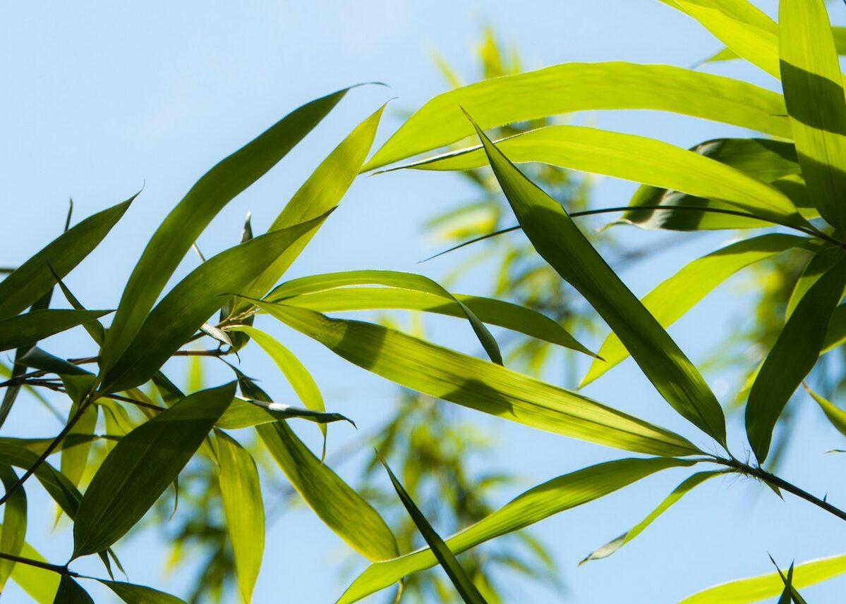 plante balcon Ouest fleurir année déco terrasse