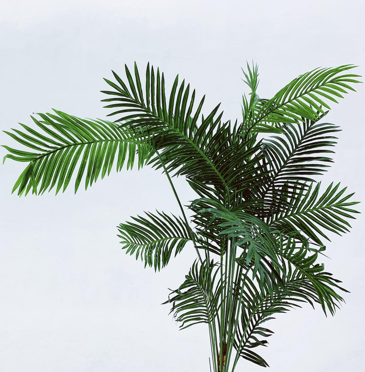 plante balcon ouest palmier vert extérieur - blog déco - clem around the corner
