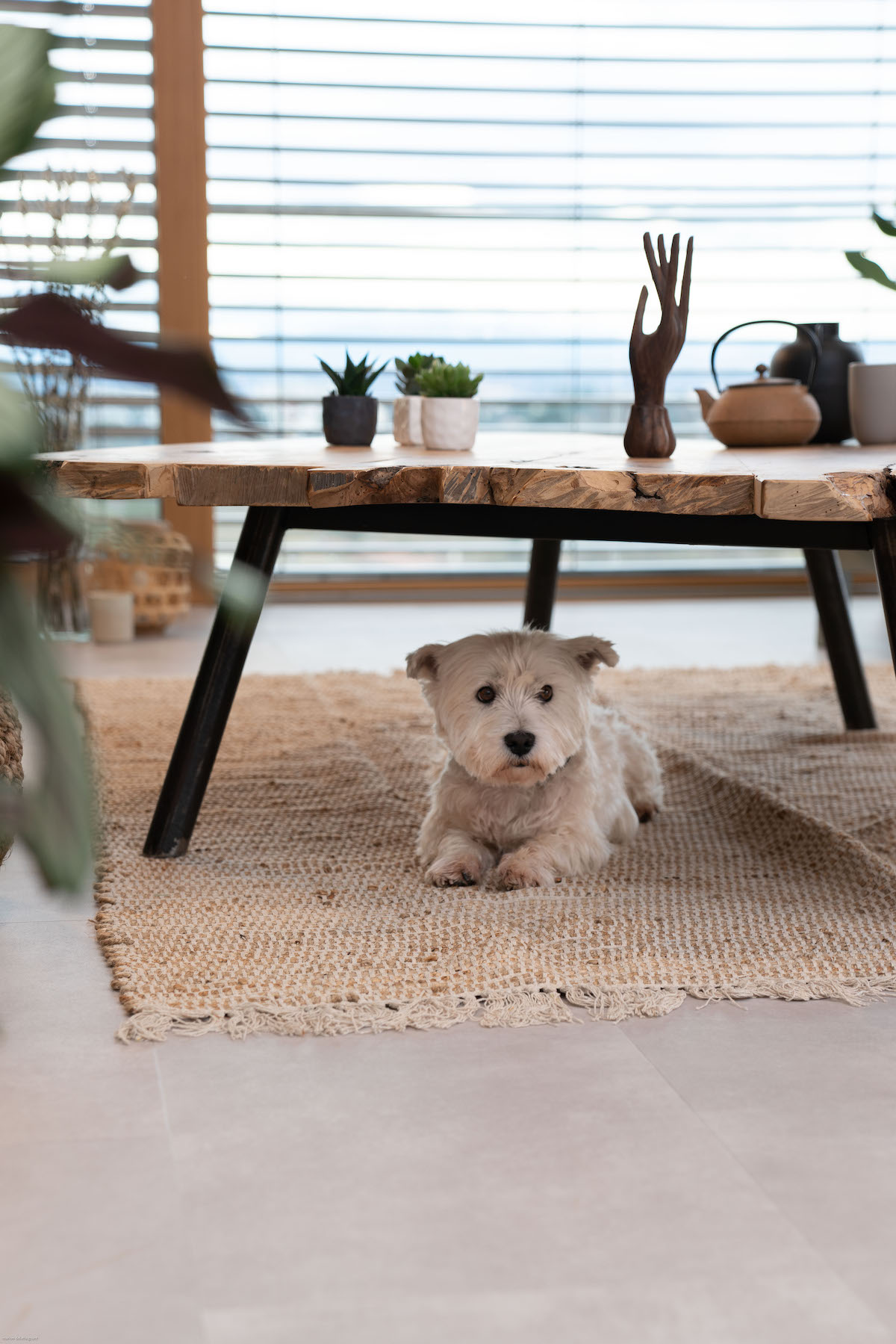 sol résistant rayure griffe chien chat West Highland White terrier Westie