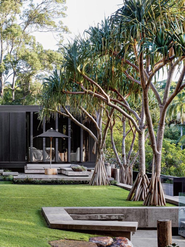 jardin tropical palmier pelouse maison ouverte nature