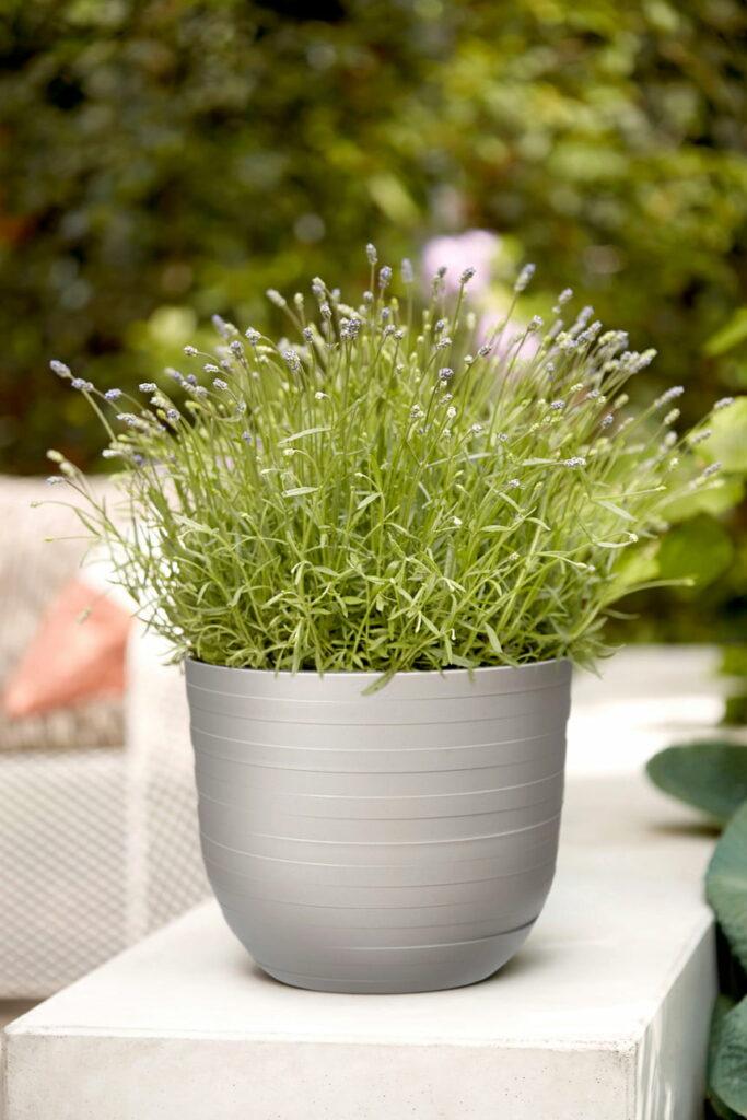 pot plante motif anneau disque circulaire gris